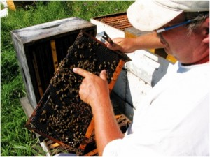 Image: Phil Veldhuis of Phil's Honey at work in Starbuck, MB Source: (Geary, n.d.)